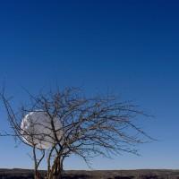 « Boule de neige dans un pommier », 2005, Beaumont, N.-B.