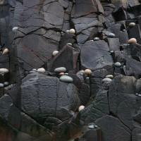 « OVO », 2010, galets de granite, Gran Manan, N.-B.