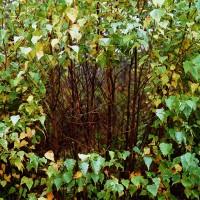 « Fenêtre dans la forêt de bouleau gris », 2002, Dieppe, N.-B.