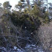 « Trouée dans la forêt », 2005, Île Miscou, N.-B.