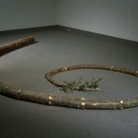 « Vaisseau V », 1999, Sapin baumier de 11.5 mètres